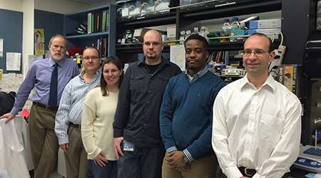In lab research, SLU team halts NASH liver damage