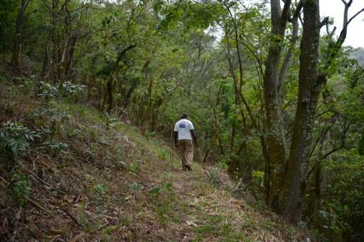 In Rio de Janeiro, the Tijuca forest covers 39.5 sq. kilometers and has been preserved despite being just minutes from neighborh