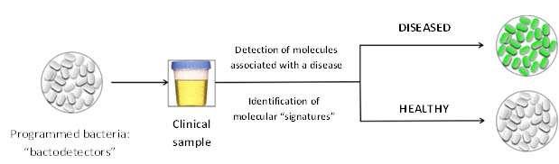 Intelligent bacteria for detecting disease