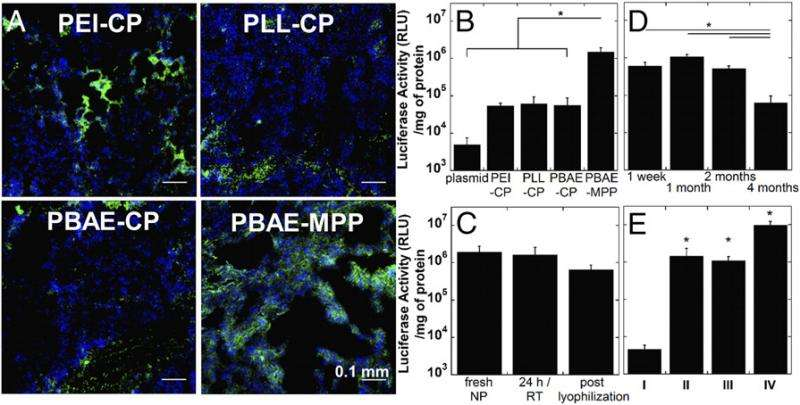 In vivo transgene expression in mouse lungs following intratracheal administration of DNA-NPs