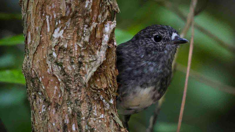 IQ tests show individual differences in bird brains