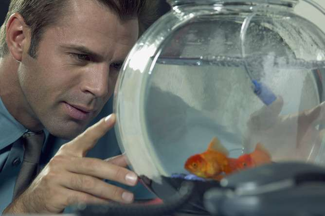 Is technology making your attention span shorter than a goldfish's?