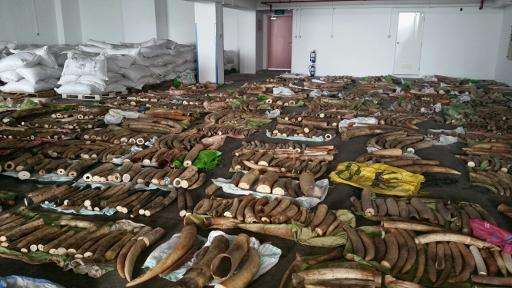 Ivory tusks, rhinoceros horns and canine teeth from big cats seized by Singapore authorities are put on display in this photo by