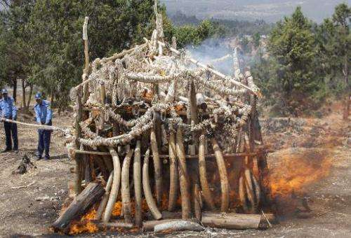 Jewelry and artifacts made of ivory weighing more than six tons in total are burnt outside Ethiopia's capital Addis Ababa on Mar
