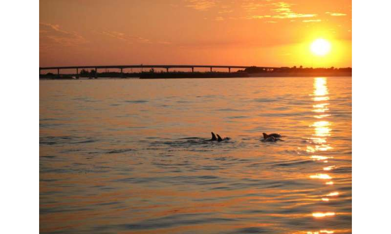Just like humans, dolphins have social networks