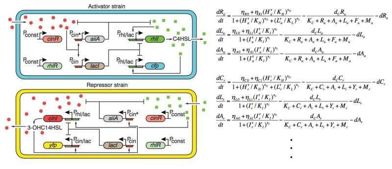 KAIST's mathematician reveals the mechanism for sustaining biological rhythms