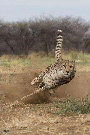 Khayjay running
