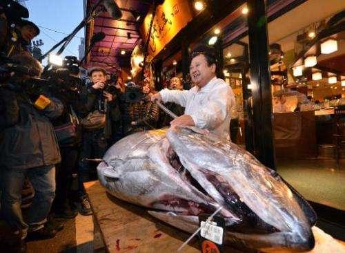 Kiyoshi Kimura, president of the Sushi-Zanmai restaurant chain, displays a 180kg bluefin tuna at his main restaurant near Tokyo'