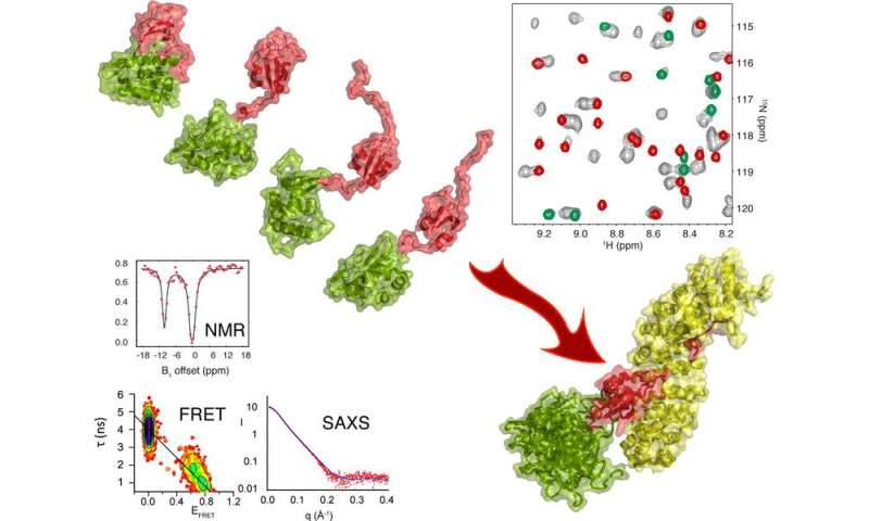 Large scale conformational dynamics control the function of H5N1 influenza polymerase