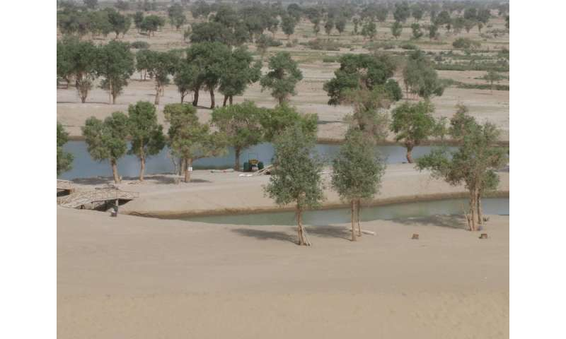 Last chance for oasis in China's desert