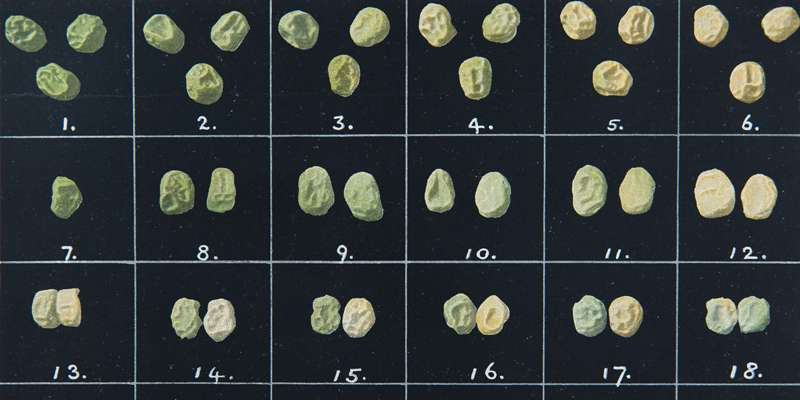 Learning the right lesson from Mendel's peas