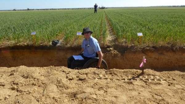 El tratamiento con cal prueba los cultivos y los nutrientes del suelo