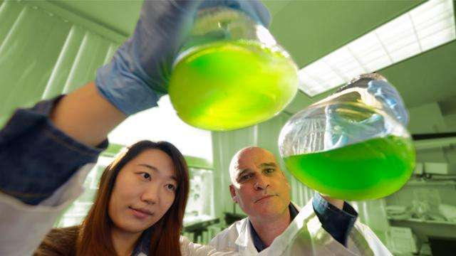 Lipid helps keep algae and brain fluid moving