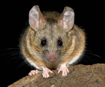 'Love hormone' oxytocin, possible anxiety drug, shows different effects in male and female mice