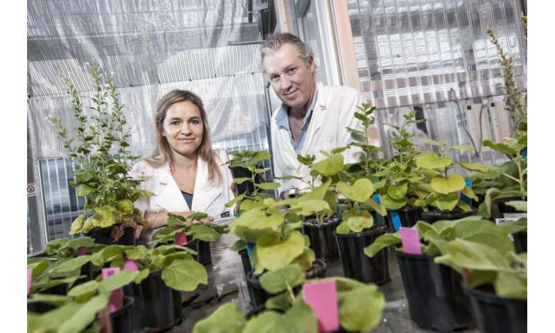 'Magic' plant discovery could lead to growing food in space