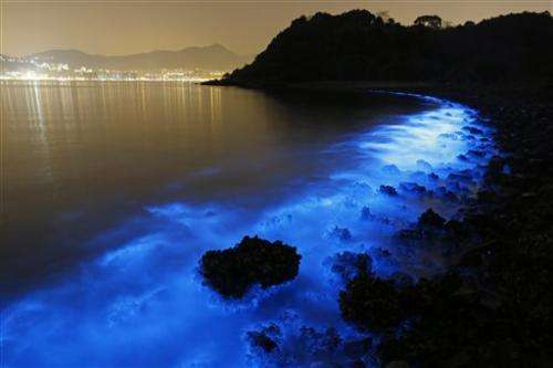 Magnificent blue glow of Hong Kong seas also disturbing