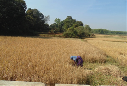 Making agriculture sustainable in one of India's poorest states