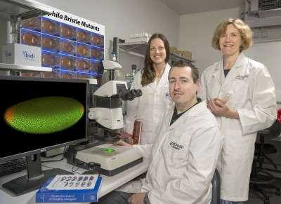 Making heads and tails of embryo development