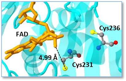 Mapping redox switches in cyanobacteria advances use as biofuel