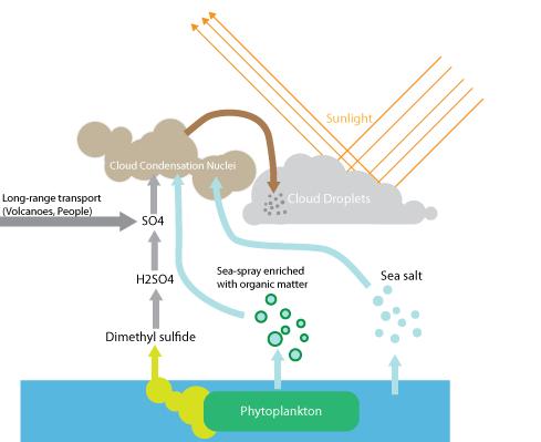 Marine plankton brighten clouds over Southern Ocean
