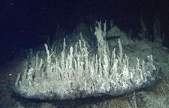 MBARI researchers discover deepest high-temperature hydrothermal vents in Pacific Ocean