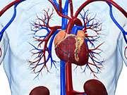 Mediterranean diet linked to lower left ventricular mass