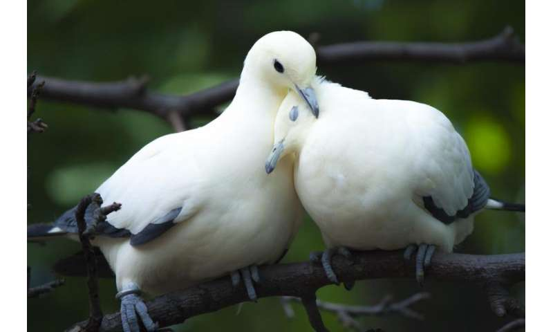 Meet the wild animals who put their partners first (just don't call it love)