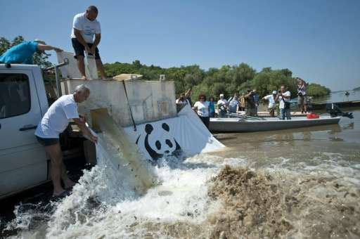 Members of conservationist group WWF Bulgaria release baby sturgeons in the Danube river, near the village of Vetren, northeaste