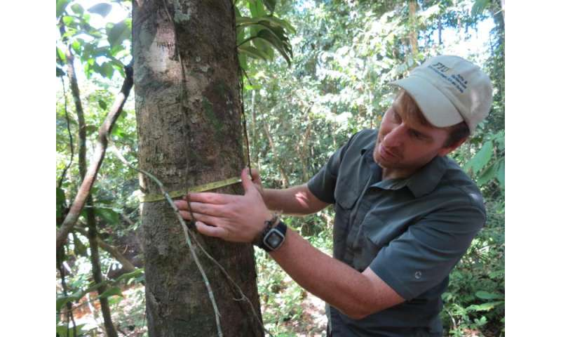 Migrating Amazonian trees are a cause for concern