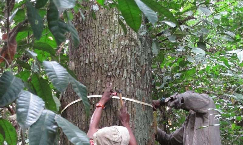 Models for predicting carbon levels in Central African forests