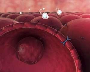 Molecular mechanism for regulating blood sugar could enhance understanding of diabetes