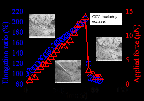 Monitoring the real-time deformation of carbon nanocoils under axial loading