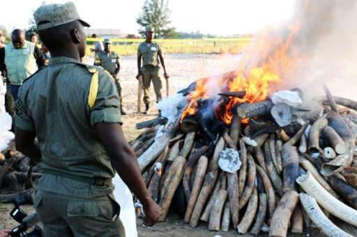 Mozambican authorities stand near a burning pile of ivory and rhino horns in Maputo on July 6, 2015