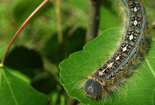Munching bugs thwart eager trees, reducing the carbon sink