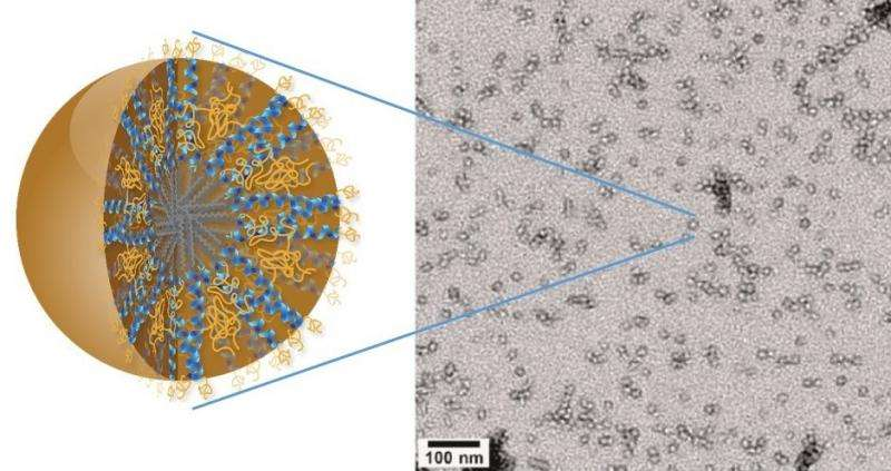 Nanocarriers may carry new hope for brain cancer therapy