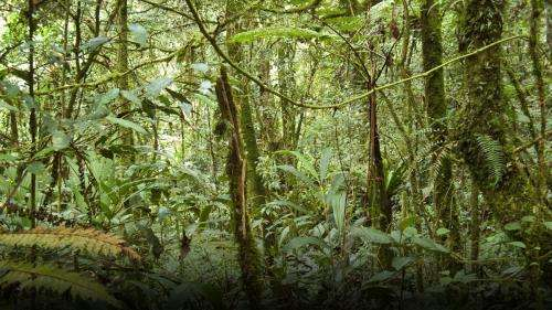 NASA finds good news on forests and carbon dioxide