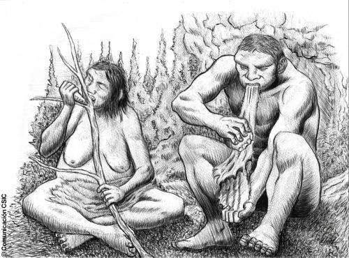 Neanderthal groups based part of the their lifestyle on the sexual division of labor