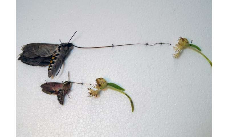Nectar thieves are damaging rare orchids in North Dakota
