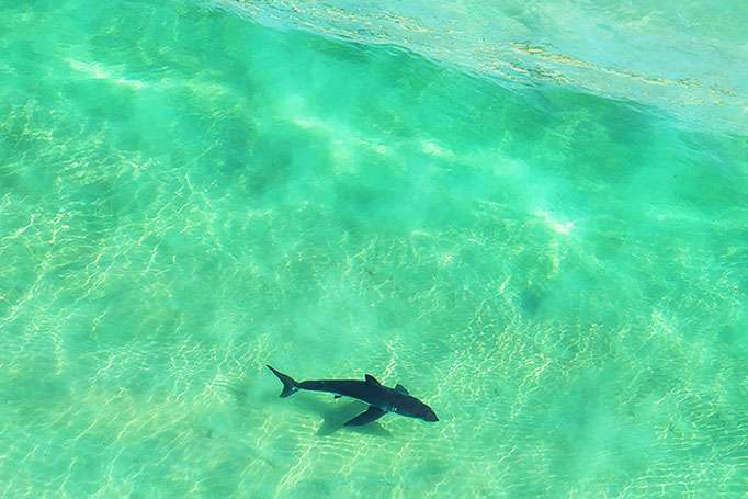 Need for reliable data on sharks
