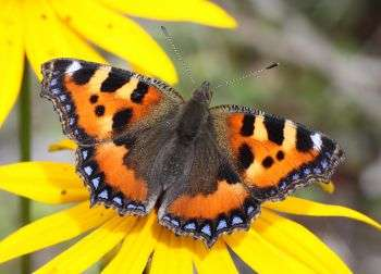 Neonicotinoid pesticides linked to butterfly declines in the UK