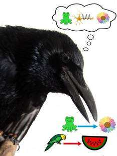 Neurons in crows' brains signal which pictures belong together