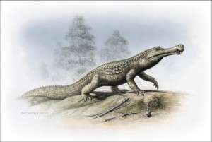 New fossil croc on the block