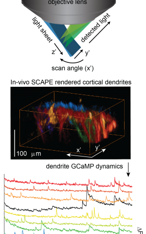 New high-speed 3-D microscope -- SCAPE -- gives deeper view of living things