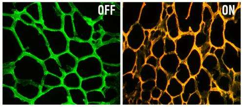 New nanodevice defeats drug resistance