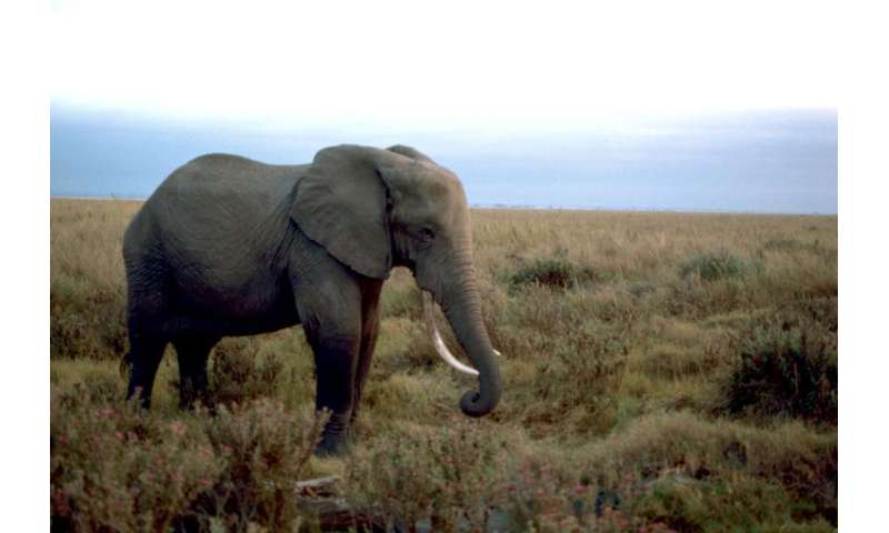 New petition seeks to save elephants, end ivory importation in US