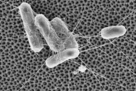 New tech application keeps bacteria from sticking to surfaces