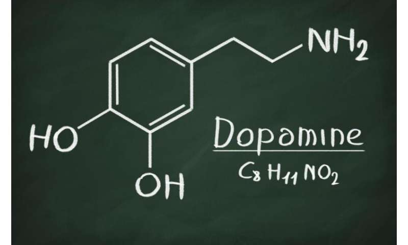 New theory integrates dopamine's role in learning, motivation