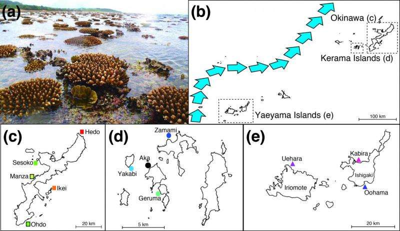 New theory of Okinawan coral migration and diversity proposed