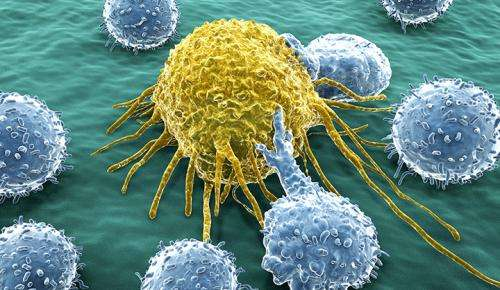 New tool helps identify lung cancer patients who will respond to immune therapies
