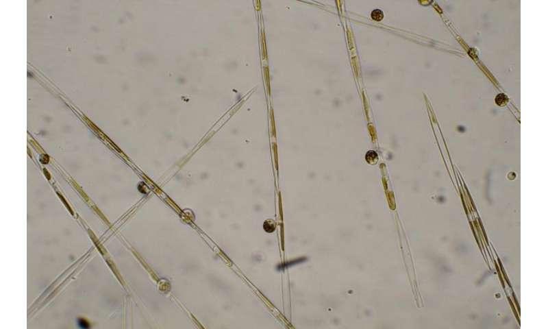 NOAA Fisheries mobilizes to gauge unprecedented West Coast toxic algal bloom